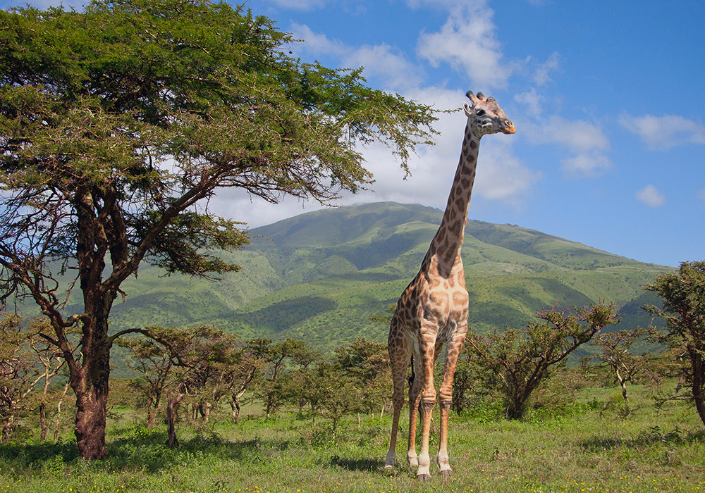news-safari.jpg
